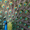 "Don't be a peacock showing off your tail feathers on the Web. Be a ""good neighbour"" and you will make much more progress."