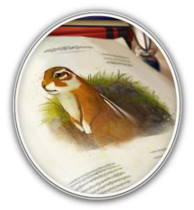 Sample vignette of an animal
