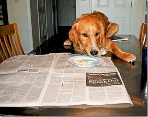The author's dog reading a newspaper