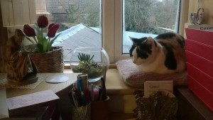 Cat on windowsill by desk