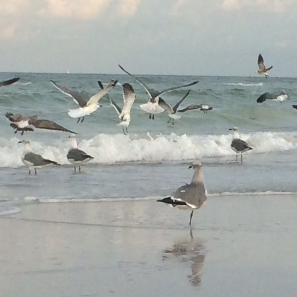 photo of beach with waves and seabirds