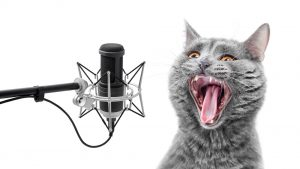 image of cat at microphone