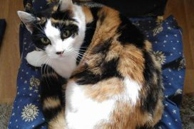 photo of Dorothy the cat