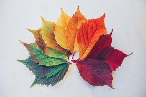 photo of leaves in all shades from spring to fall